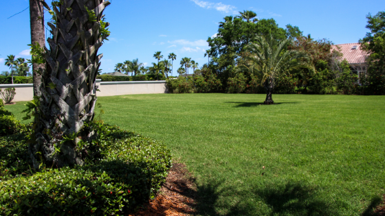 Simple Ways to Create the Perfect Lawn